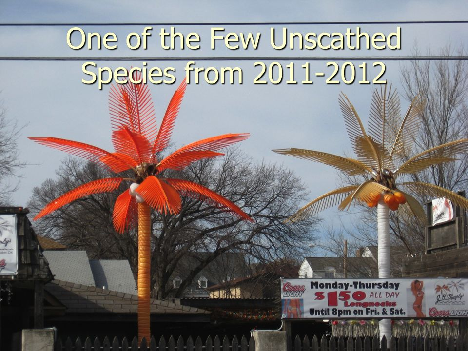 One of the Few Unscathed Species from 2011-2012