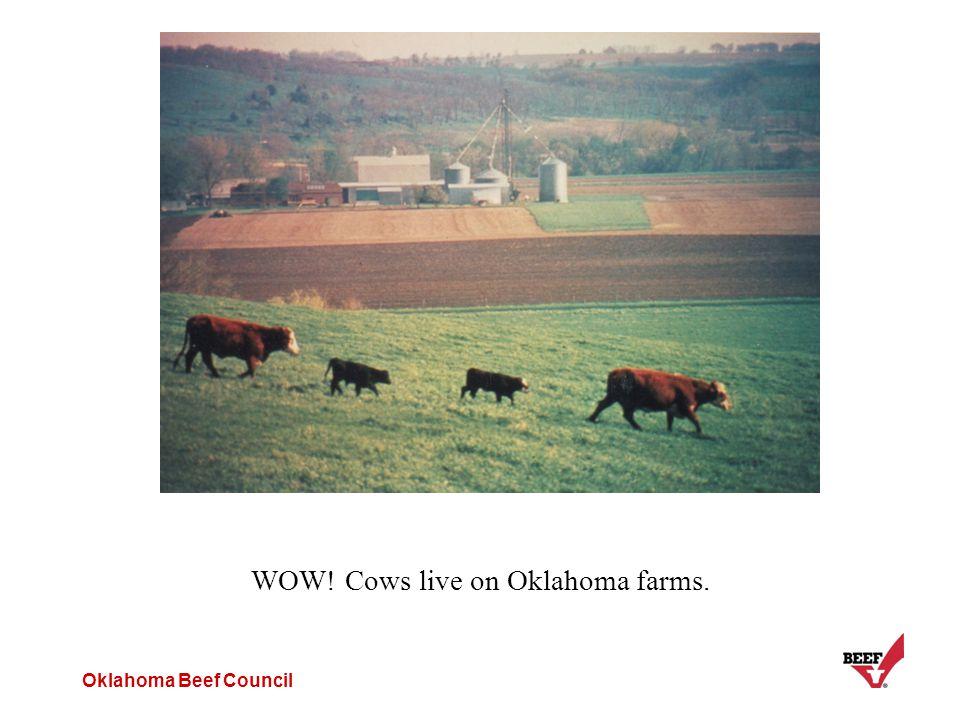 Oklahoma Beef Council WOW! Cows live on Oklahoma farms.