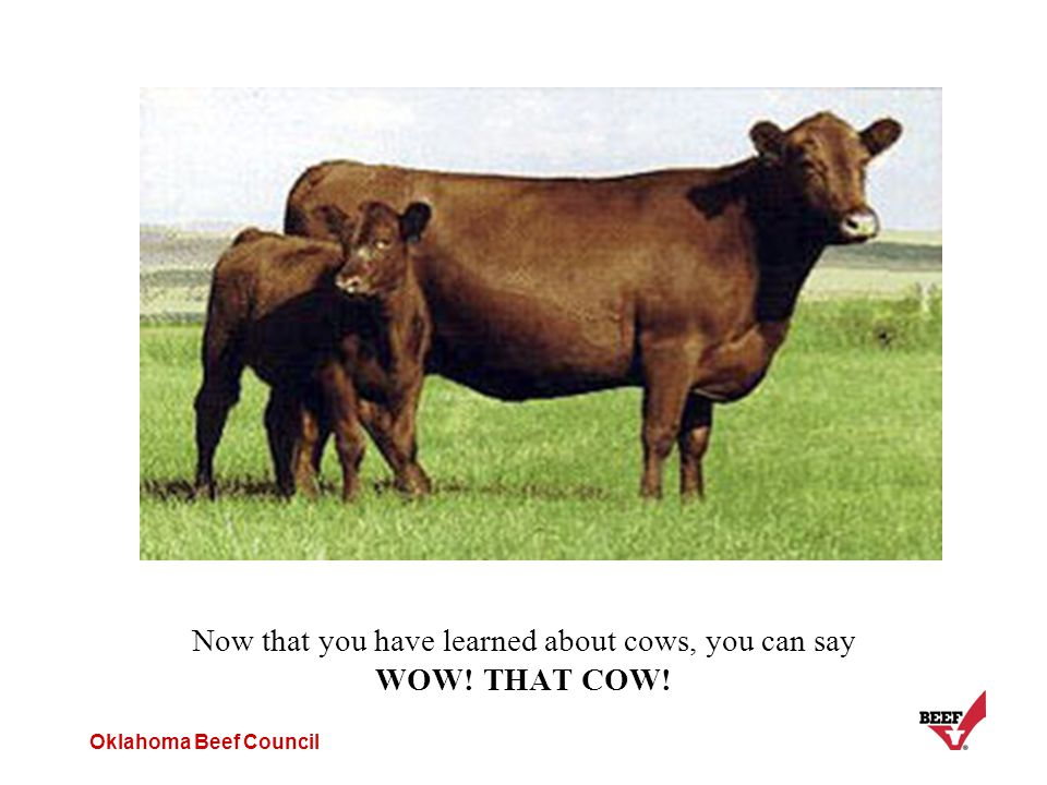Oklahoma Beef Council Now that you have learned about cows, you can say WOW! THAT COW!