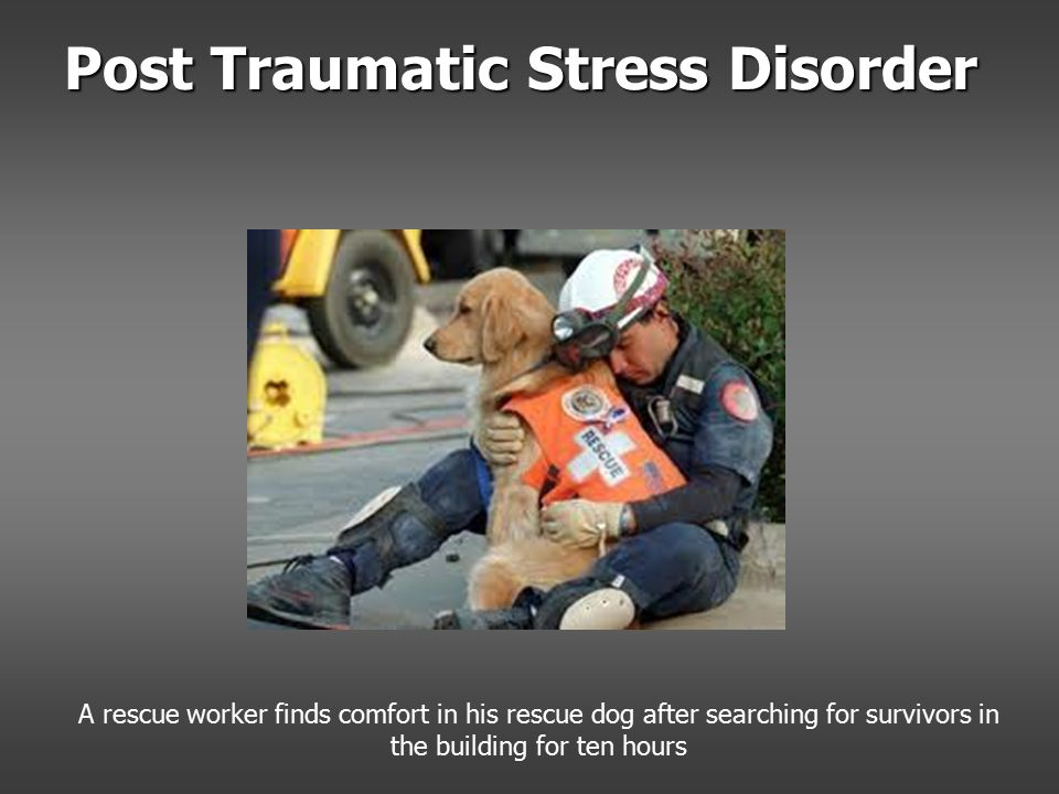 Post Traumatic Stress Disorder A rescue worker finds comfort in his rescue dog after searching for survivors in the building for ten hours