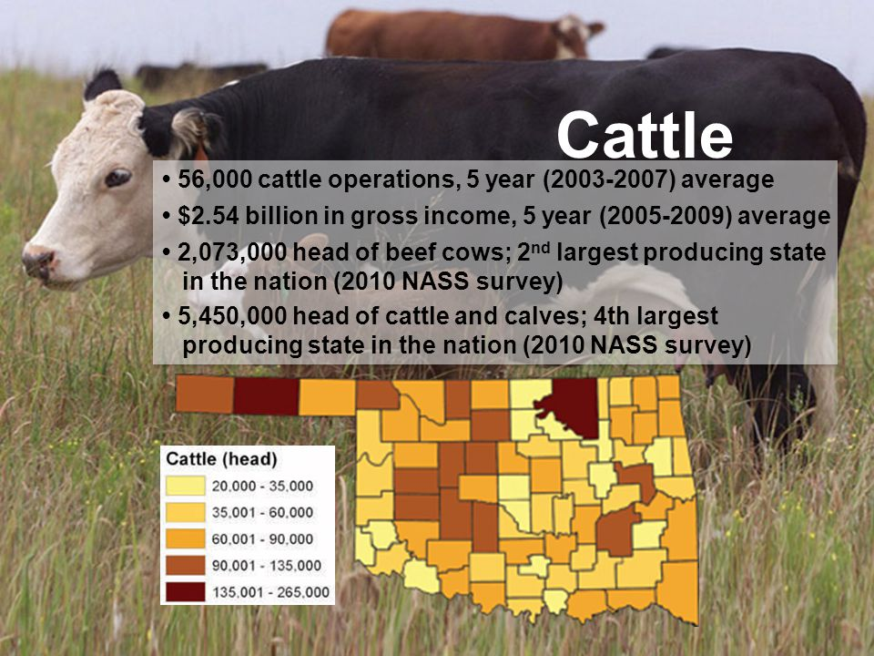 Cattle 56,000 cattle operations, 5 year (2003-2007) average $2.54 billion in gross income, 5 year (2005-2009) average 2,073,000 head of beef cows; 2 n