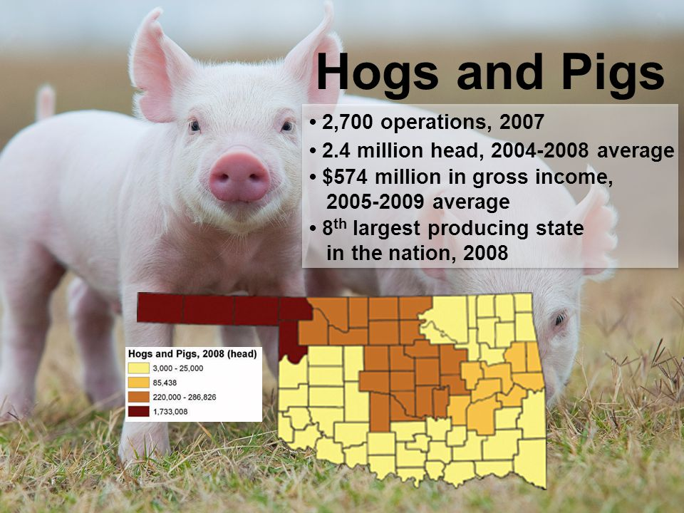 Hogs and Pigs 2,700 operations, 2007 2.4 million head, 2004-2008 average $574 million in gross income, 2005-2009 average 8 th largest producing state