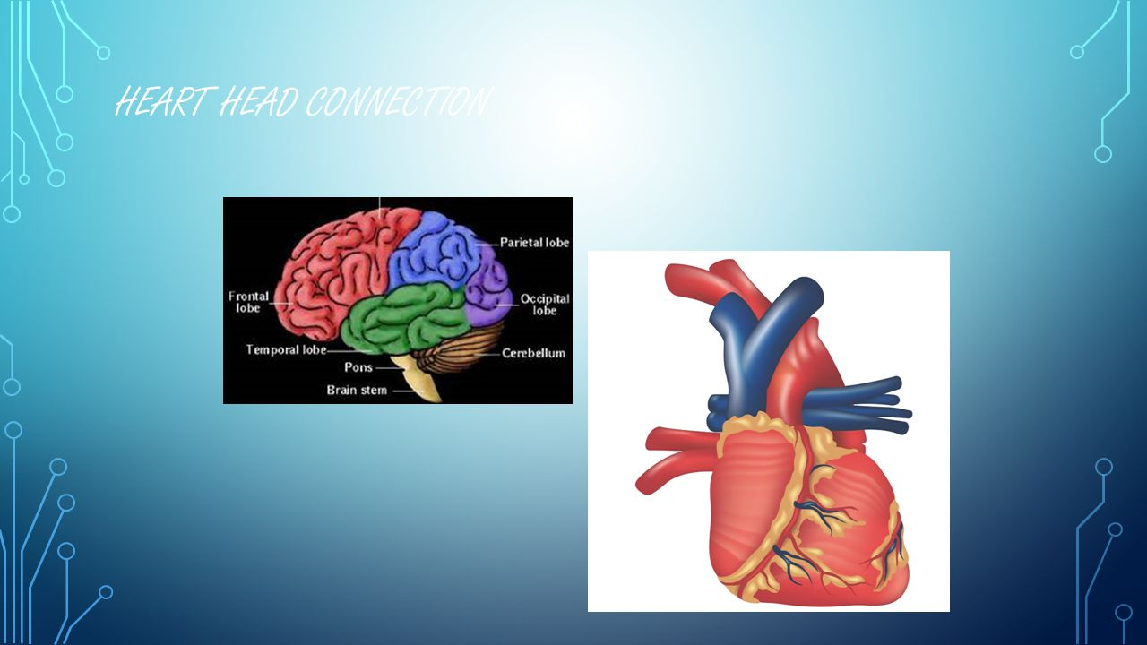HEART HEAD CONNECTION.