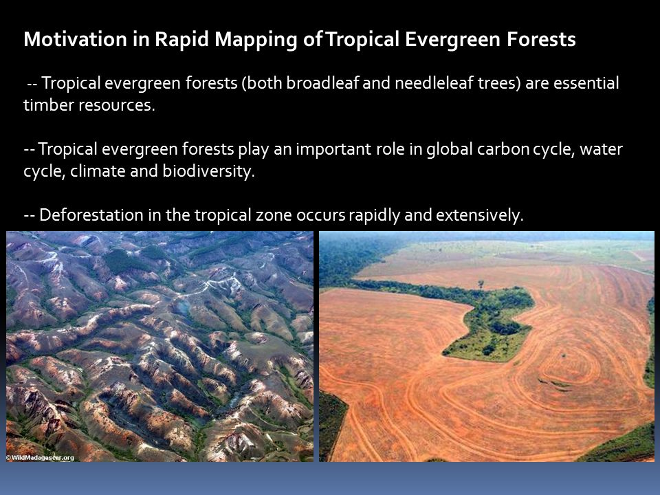 Major research approaches to map tropical forests 1.
