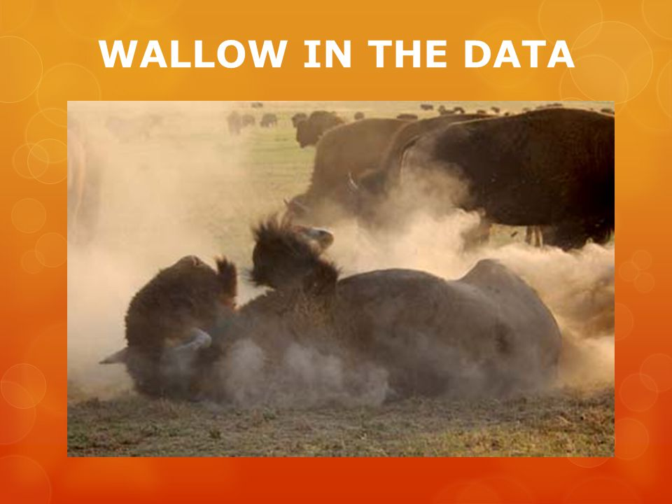 WALLOW IN THE DATA