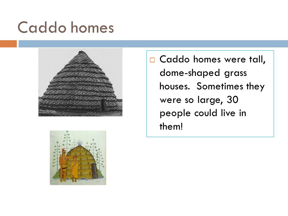 Caddo homes  Caddo homes were tall, dome-shaped grass houses. Sometimes they were so large, 30 people could live in them!