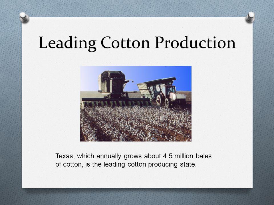 US Cotton States o Arizona o California o New Mexico o Texas Pima cotton Some cotton is also grown in Florida, Kansas and New Mexico.