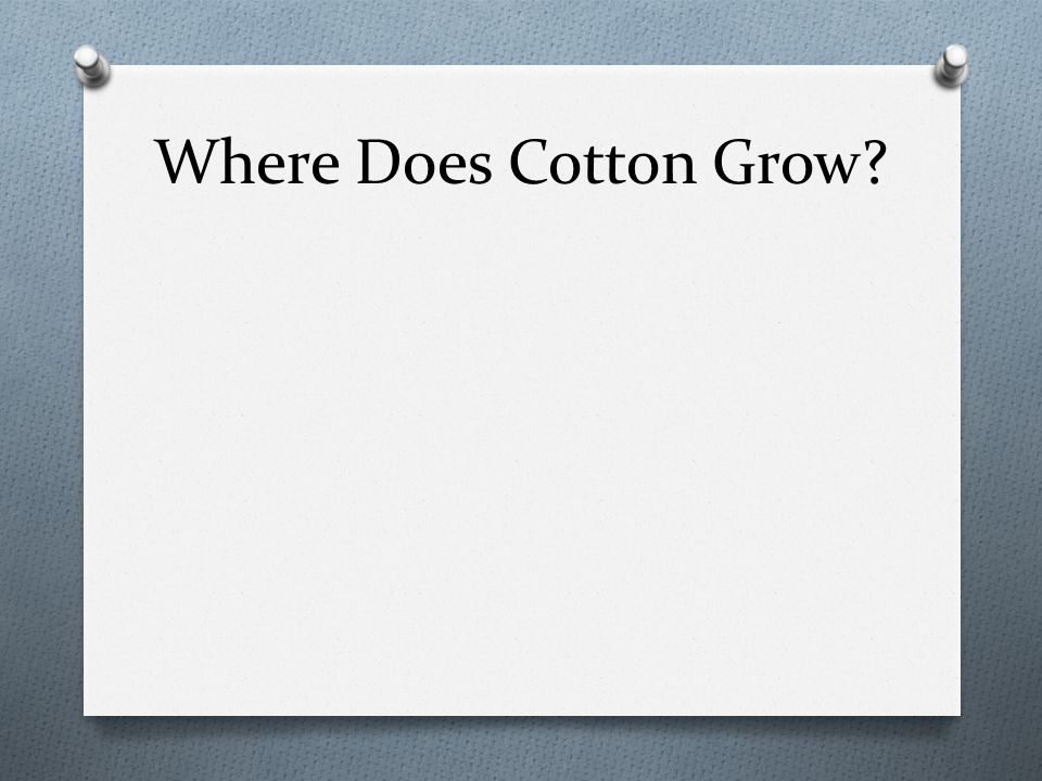 The Cotton Belt Millions of acres of cotton grow across the Southern United States