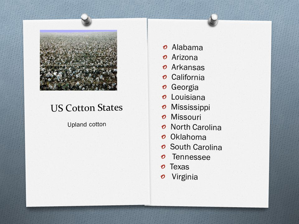 US Cotton States o Alabama o Arizona o Arkansas o California o Georgia o Louisiana o Mississippi o Missouri o North Carolina o Oklahoma o South Carolina o Tennessee o Texas o Virginia Upland cotton