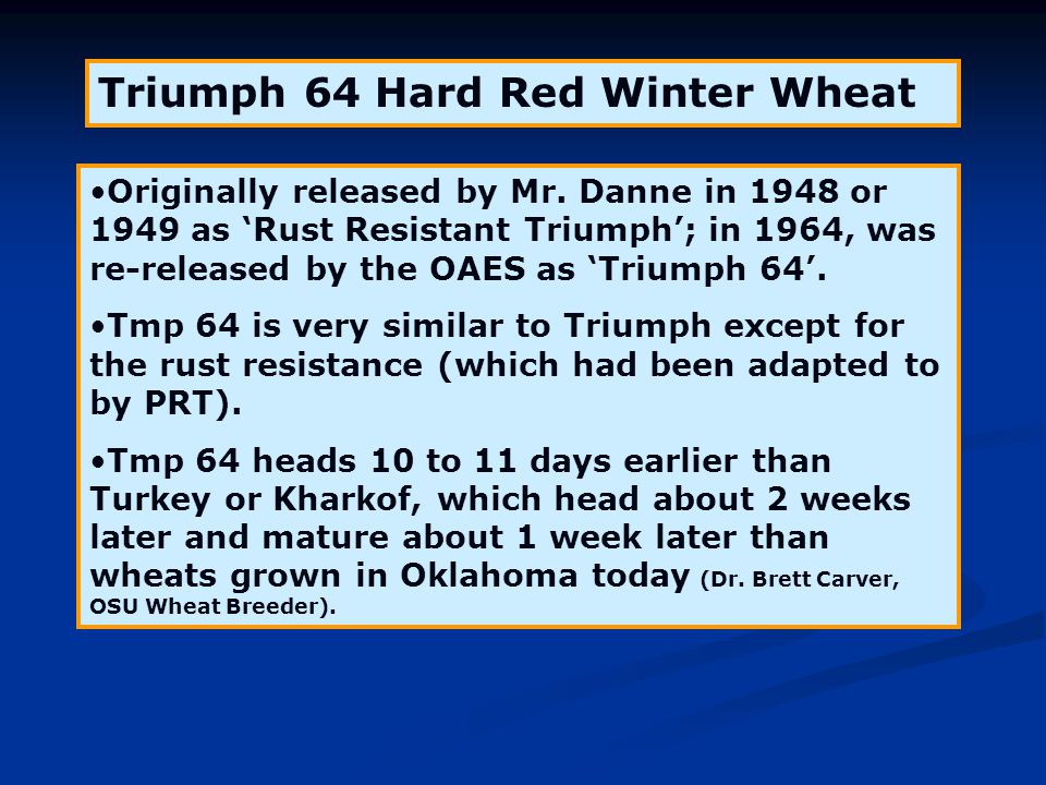 Triumph 64 Hard Red Winter Wheat Originally released by Mr. Danne in 1948 or 1949 as 'Rust Resistant Triumph'; in 1964, was re-released by the OAES as