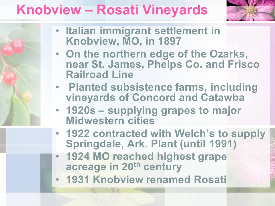 Knobview – Rosati Vineyards Italian immigrant settlement in Knobview, MO, in 1897 On the northern edge of the Ozarks, near St. James, Phelps Co. and F
