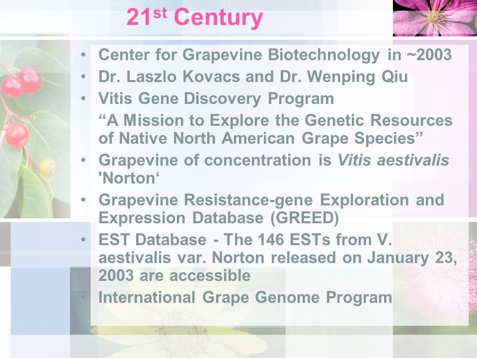 "21 st Century Center for Grapevine Biotechnology in ~2003 Dr. Laszlo Kovacs and Dr. Wenping Qiu Vitis Gene Discovery Program ""A Mission to Explore the"