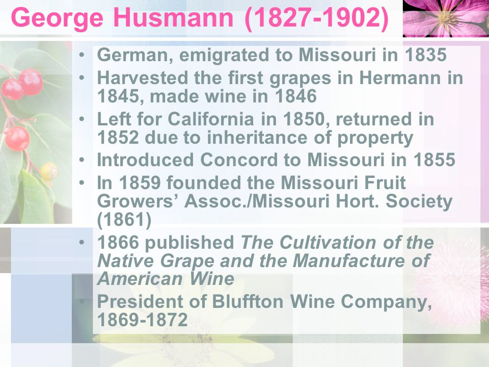 George Husmann (1827-1902) German, emigrated to Missouri in 1835 Harvested the first grapes in Hermann in 1845, made wine in 1846 Left for California