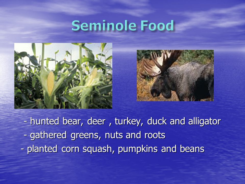 - hunted bear, deer, turkey, duck and alligator - hunted bear, deer, turkey, duck and alligator - gathered greens, nuts and roots - gathered greens, nuts and roots - planted corn squash, pumpkins and beans - planted corn squash, pumpkins and beans