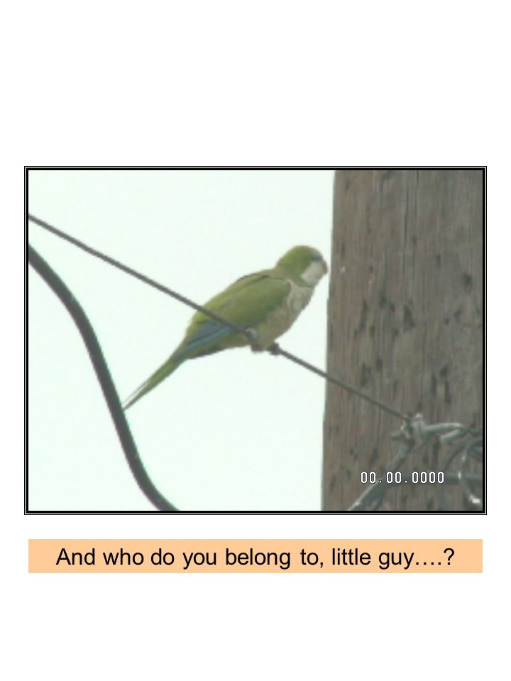 And who do you belong to, little guy….
