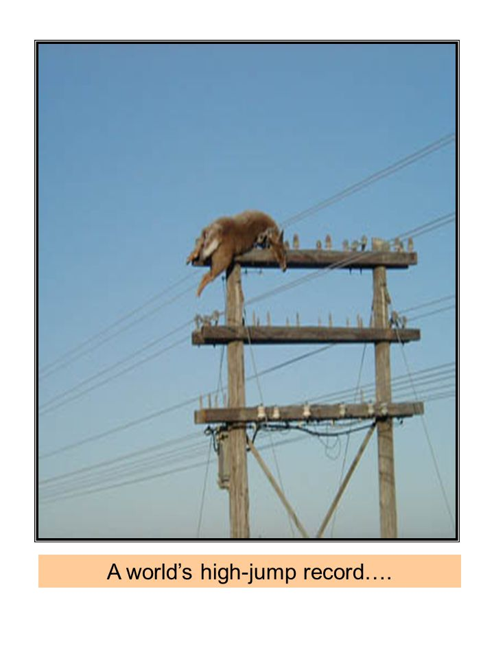 A world's high-jump record….