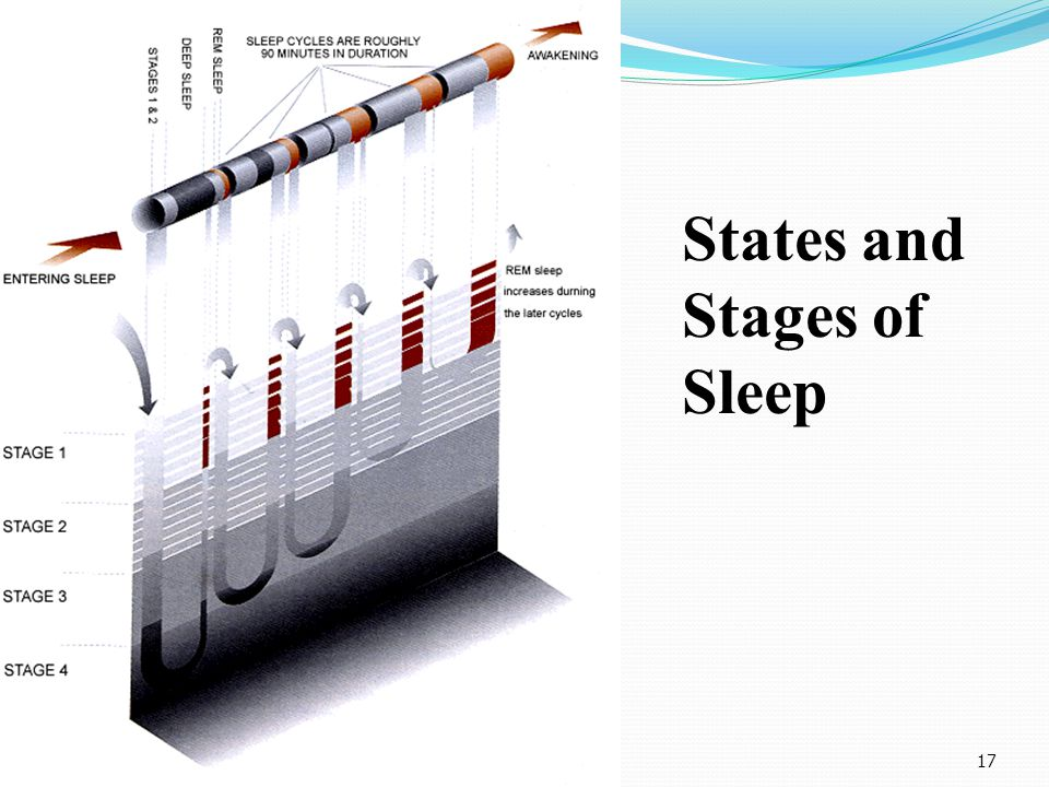 17 States and Stages of Sleep