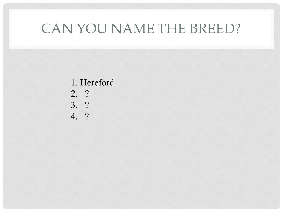 CAN YOU NAME THESE BREEDS 1 2 3 4