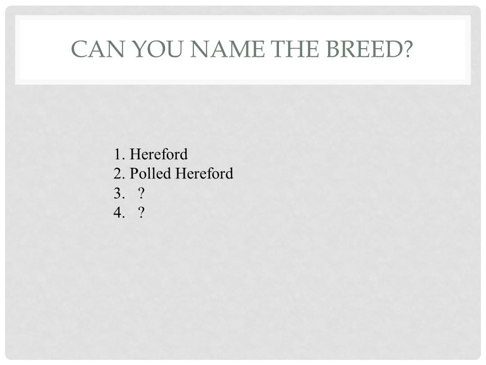 CAN YOU NAME THE BREEDS 1 2 3 4