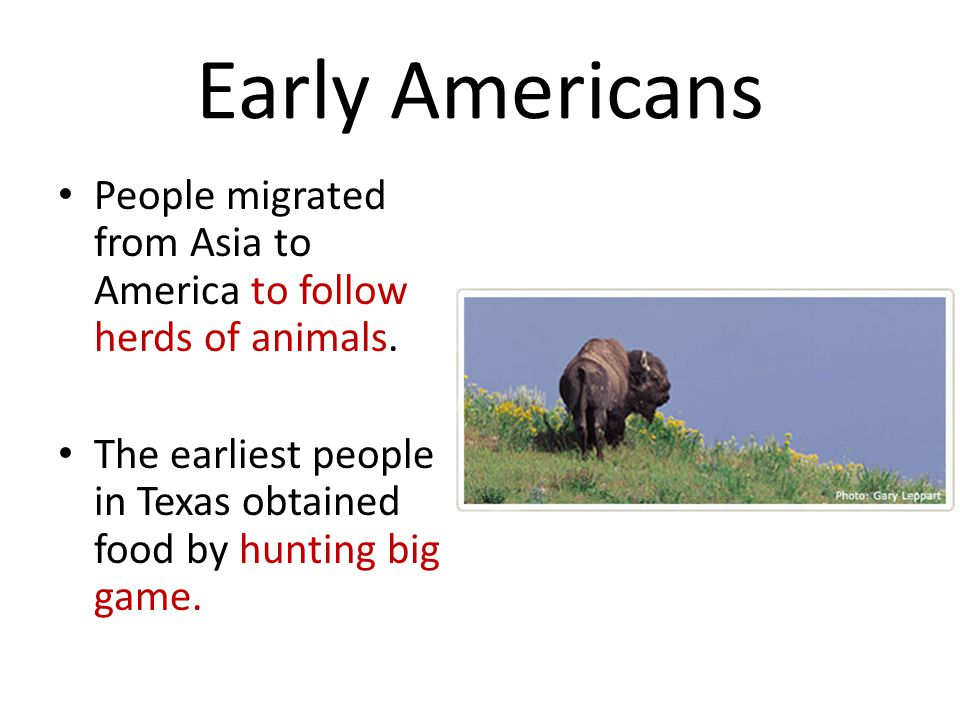 Early Americans People migrated from Asia to America to follow herds of animals. The earliest people in Texas obtained food by hunting big game.