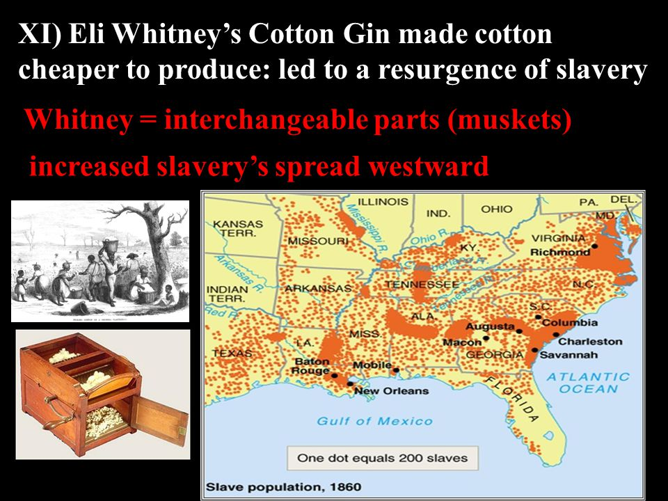 XI) Eli Whitney's Cotton Gin made cotton cheaper to produce: led to a resurgence of slavery Whitney = interchangeable parts (muskets) increased slavery's spread westward