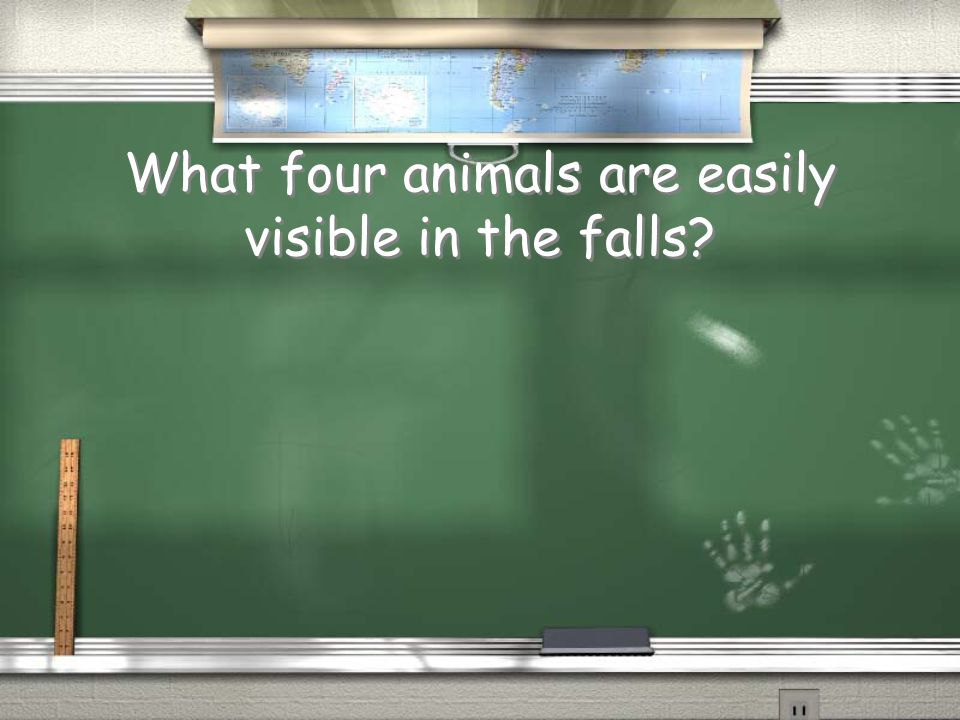What four animals are easily visible in the falls?
