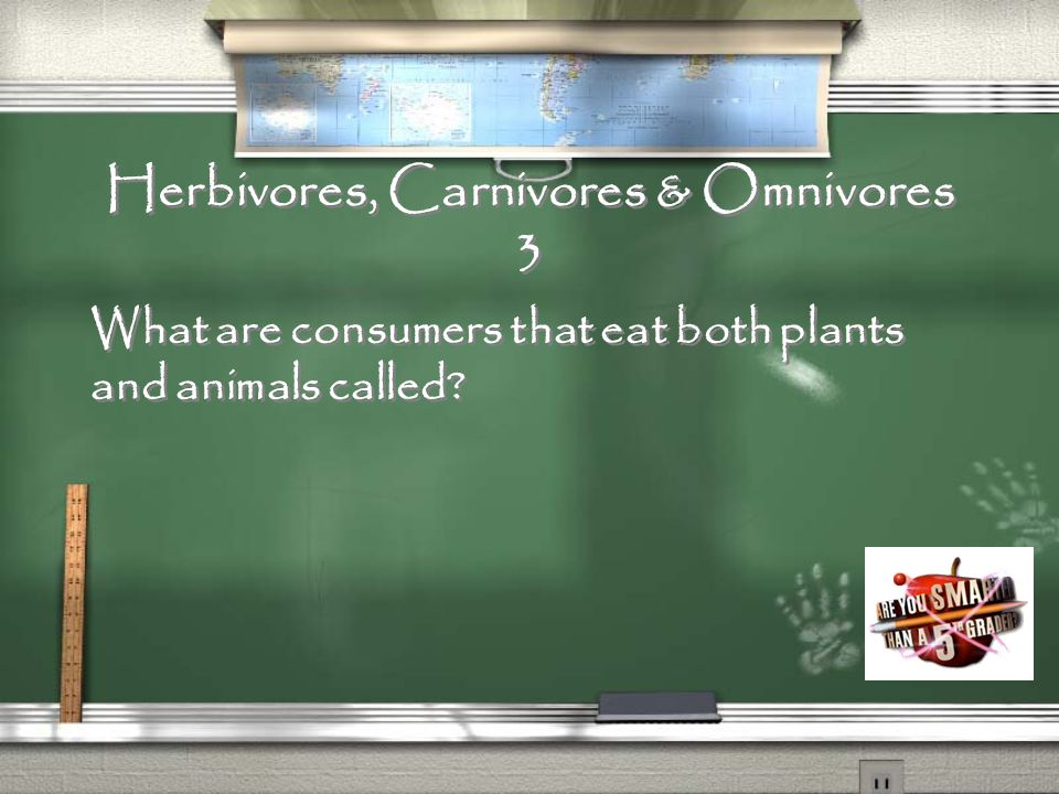 Herbivores, Carnivores & Omnivores 2 What are consumers that eat only animals called?