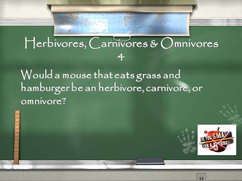 Herbivores, Carnivores & Omnivores 3 What are consumers that eat both plants and animals called?