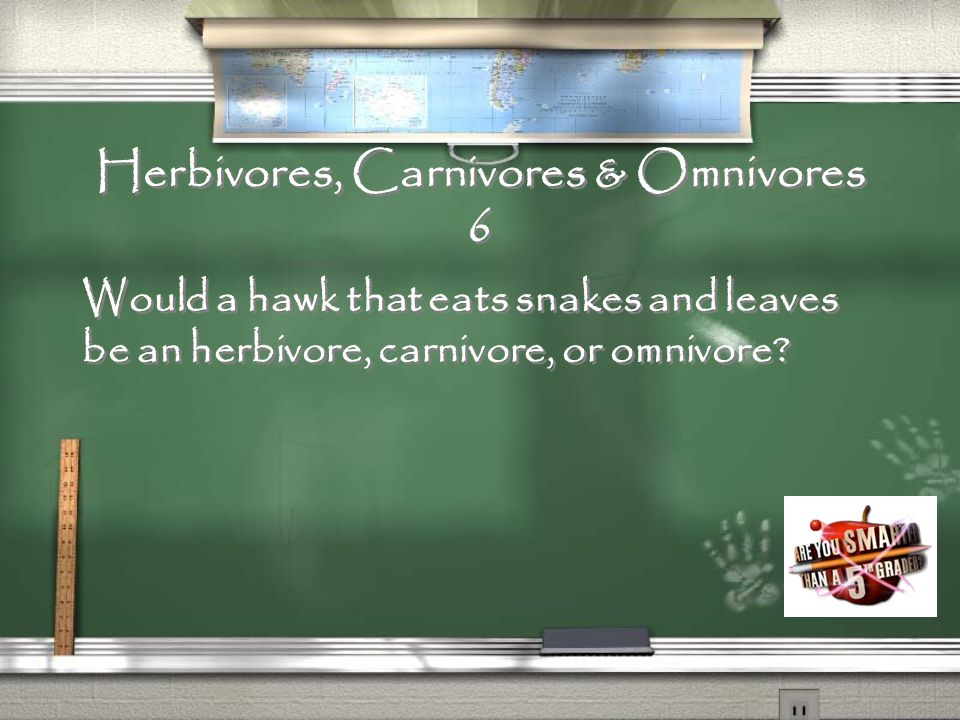Herbivores, Carnivores & Omnivores 5 Would a cow that eats only grass and grain be an herbivore, carnivore, or omnivore?