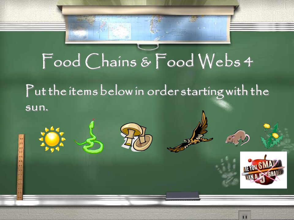 Food Chains & Food Webs 3 What is the pattern that shows how food chains are related?