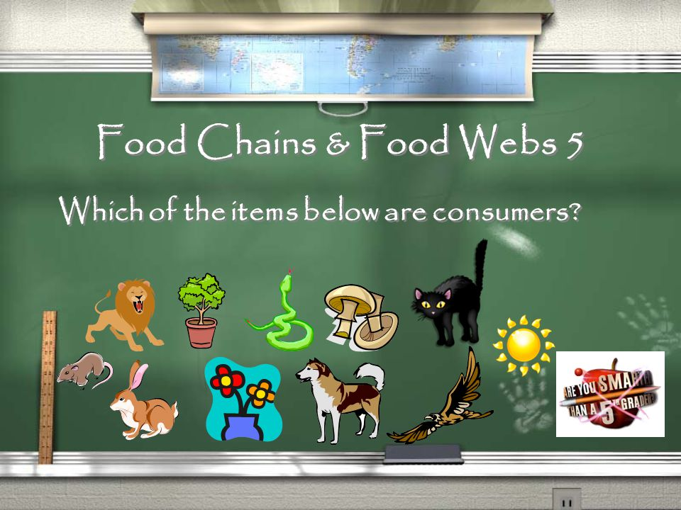 Food Chains & Food Webs 4 Put the items below in order starting with the sun.