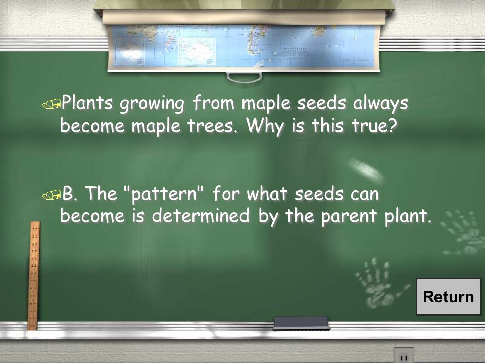 / Plants growing from maple seeds always become maple trees. Why is this true? / A. Maple trees are easy to grow from seeds. / B. The