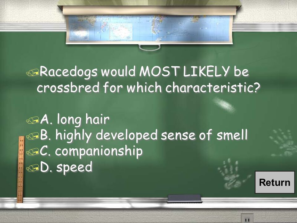 / Racedogs would MOST LIKELY be crossbred for which characteristic? / A. long hair / B. highly developed sense of smell / C. companionship / D. speed