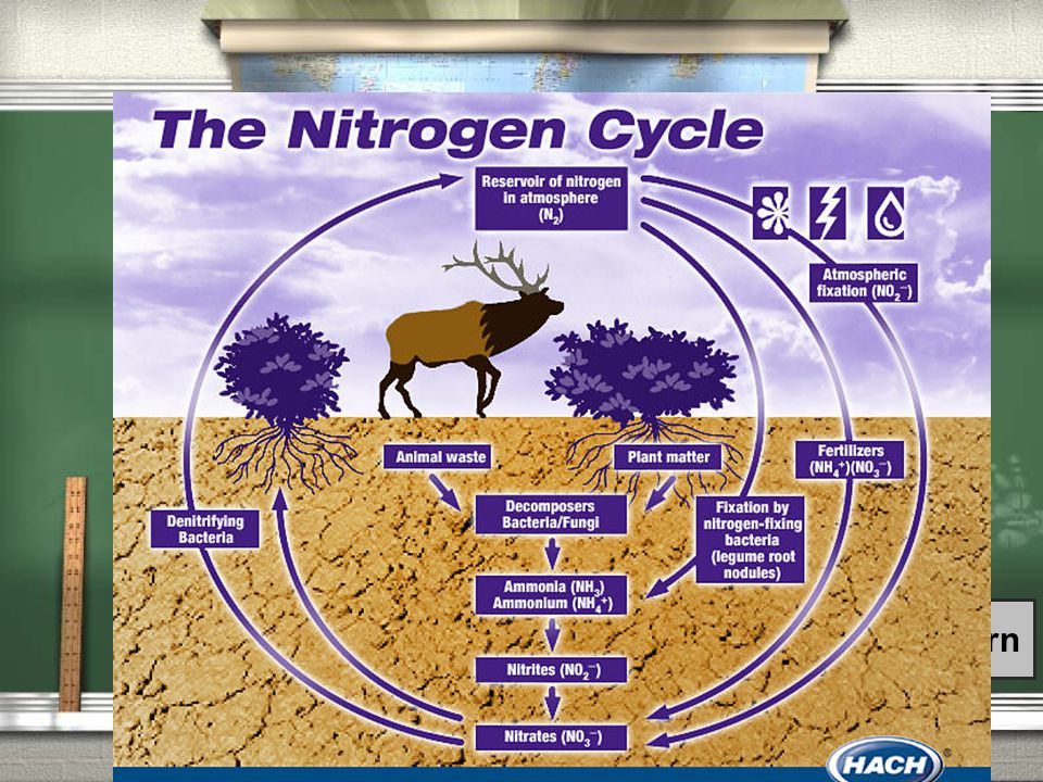 5th Grade Topic 2 Question / Draw the Nitrogen cycle on your paper.