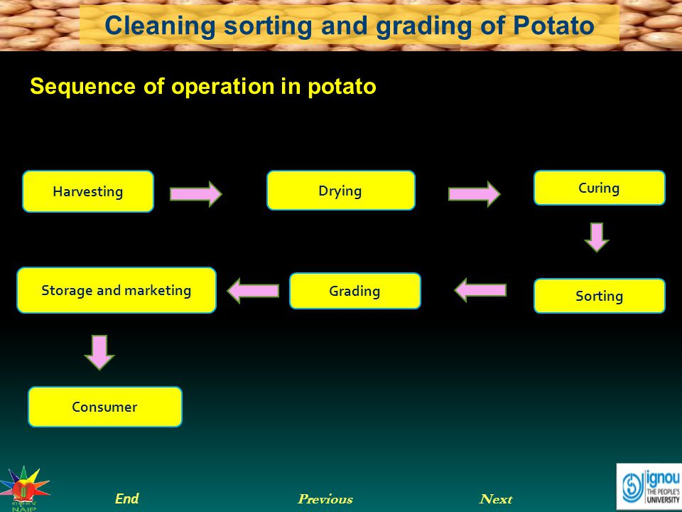 Next End Previous Cleaning sorting and grading of Potato Let us sum up Potato is the main vegetable crop in India and a staple food in many of the European countries.