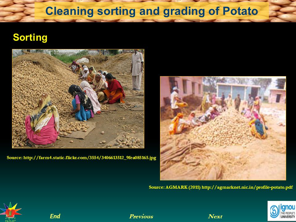 Next End Previous Cleaning sorting and grading of Potato Source: AGMARK (2011) http://agmarknet.nic.in/profile-potato.pdf Source: http://farm4.static.