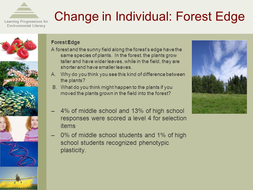 Learning Progressions for Environmental Literacy Change in Individual: Forest Edge Forest Edge A forest and the sunny field along the forest's edge have the same species of plants.