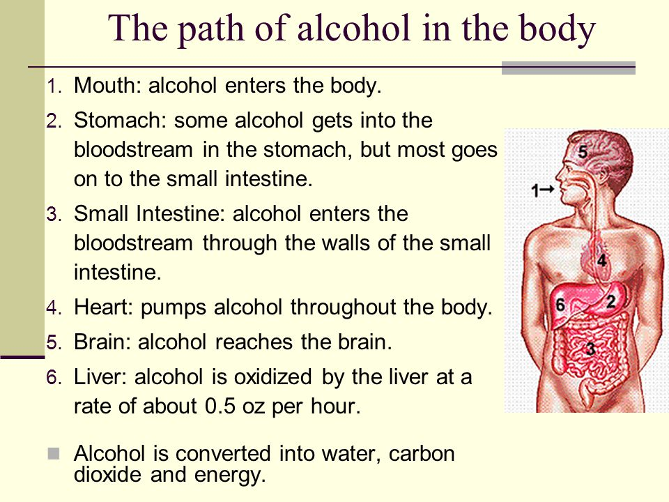 The path of alcohol in the body 1. Mouth: alcohol enters the body. 2. Stomach: some alcohol gets into the bloodstream in the stomach, but most goes on