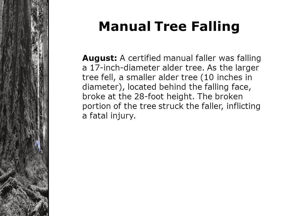 Manual Tree Falling August: A certified manual faller was falling a 17-inch-diameter alder tree. As the larger tree fell, a smaller alder tree (10 inc