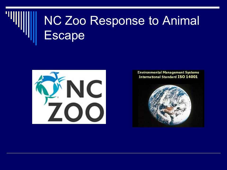 NC Zoo Response to Animal Escape