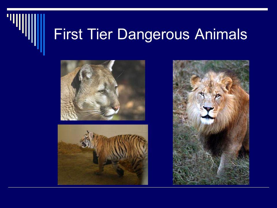 First Tier Dangerous Animals