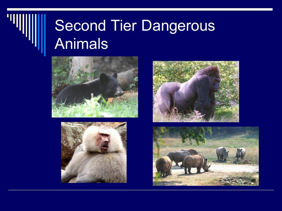 Second Tier Dangerous Animals
