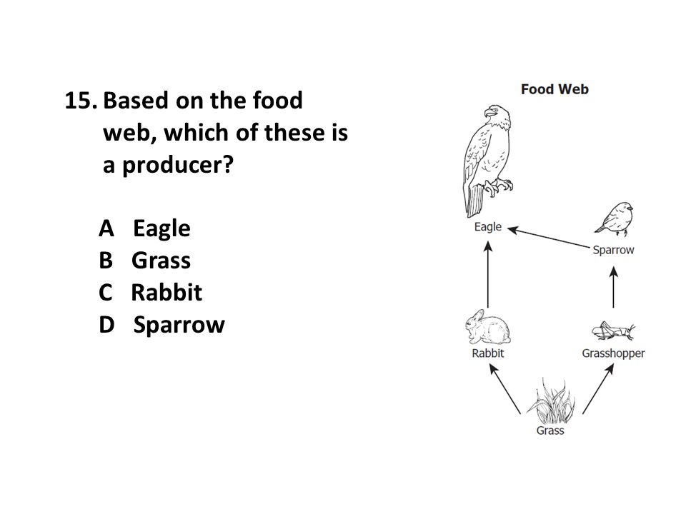 15.Based on the food web, which of these is a producer? A Eagle B Grass C Rabbit D Sparrow