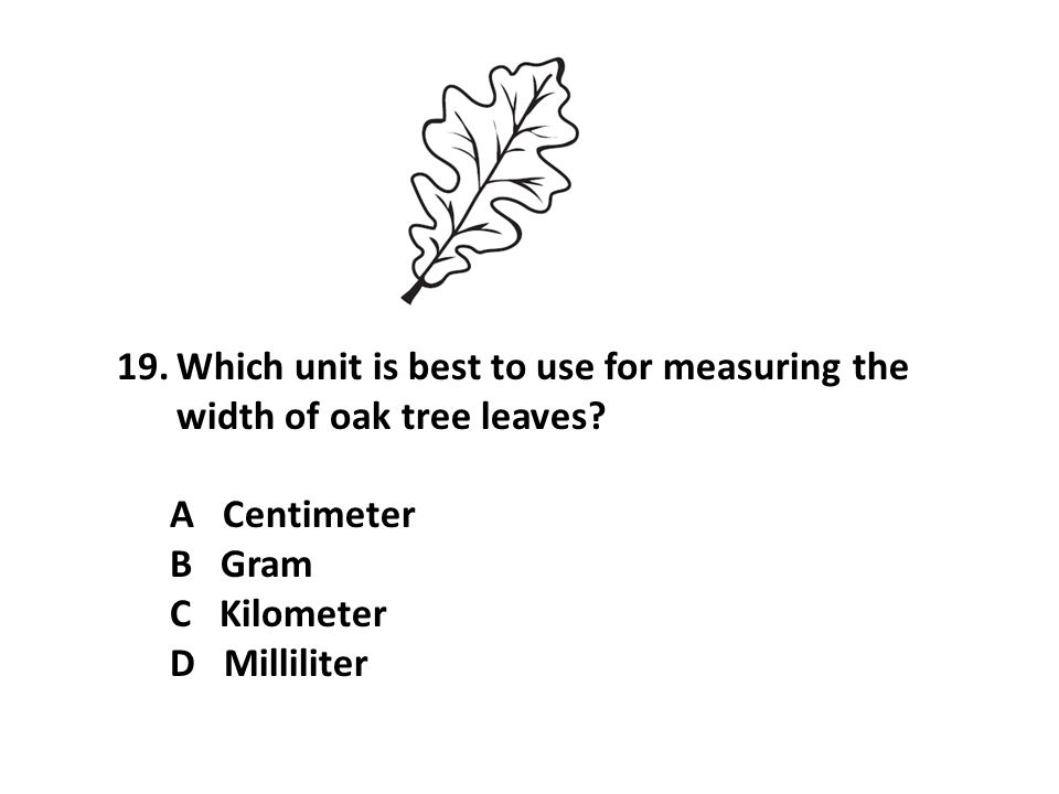 19.Which unit is best to use for measuring the width of oak tree leaves? A Centimeter B Gram C Kilometer D Milliliter