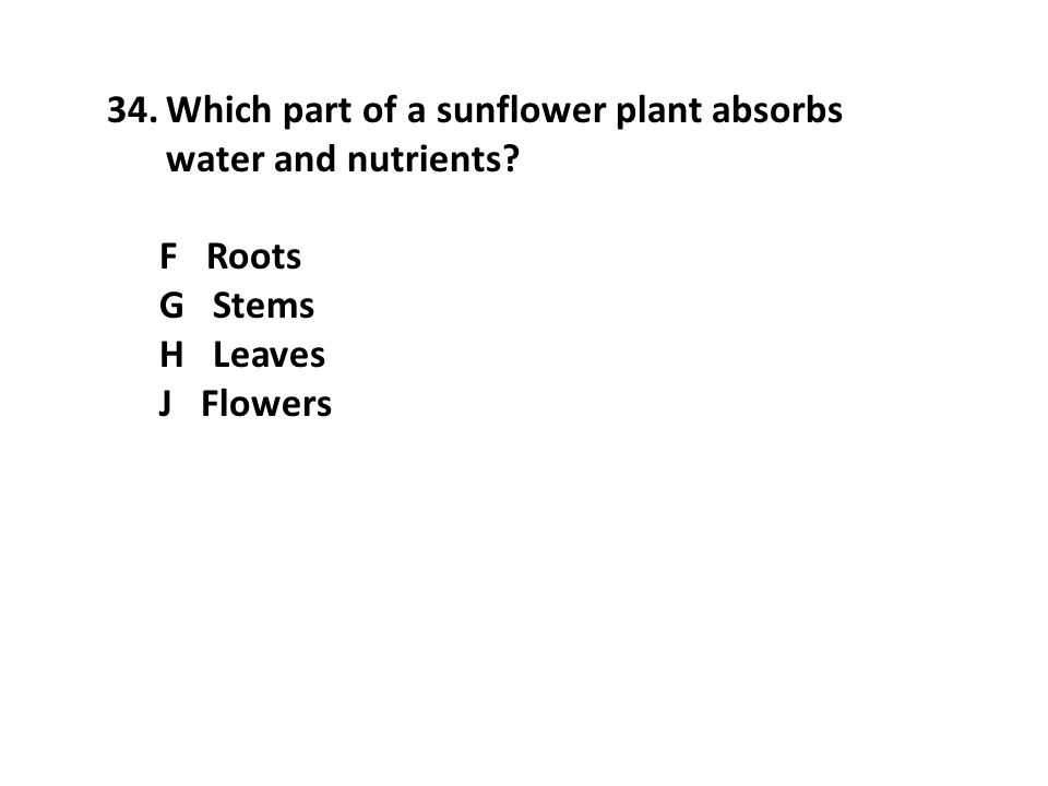34.Which part of a sunflower plant absorbs water and nutrients? F Roots G Stems H Leaves J Flowers