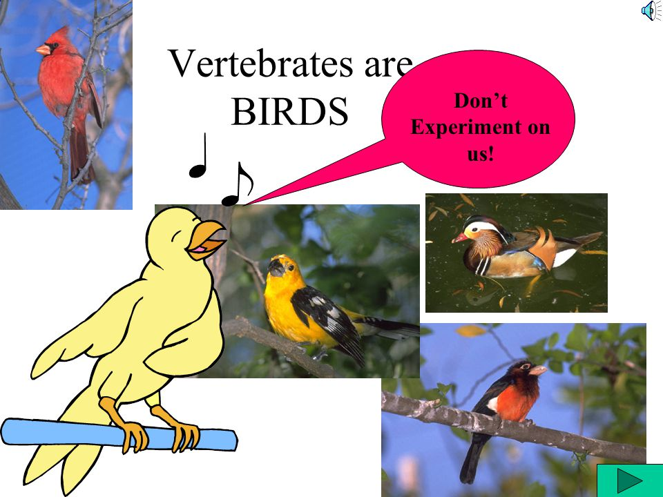 Vertebrates are BIRDS Don't Experiment on us!