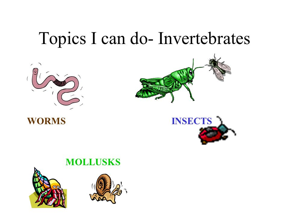 Topics I can do- Invertebrates WORMS INSECTS MOLLUSKS