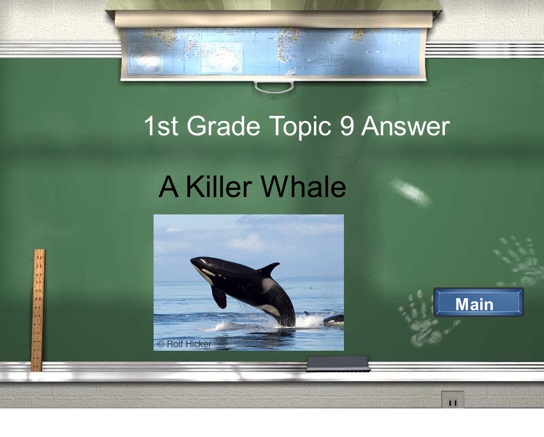 1st Grade Topic 9 Answer Main A Killer Whale