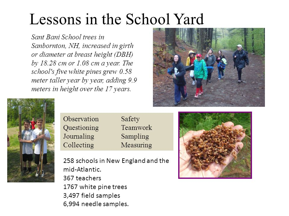 Lessons in the School Yard Sant Bani School trees in Sanbornton, NH, increased in girth or diameter at breast height (DBH) by 18.28 cm or 1.08 cm a year.