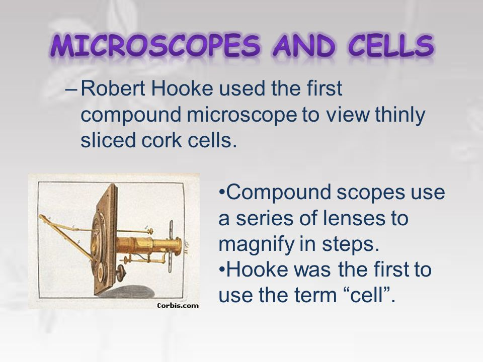 1600's. –Anton van Leeuwenhoek first described living cells as seen through a simple microscope.